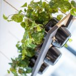 hanging plant feature
