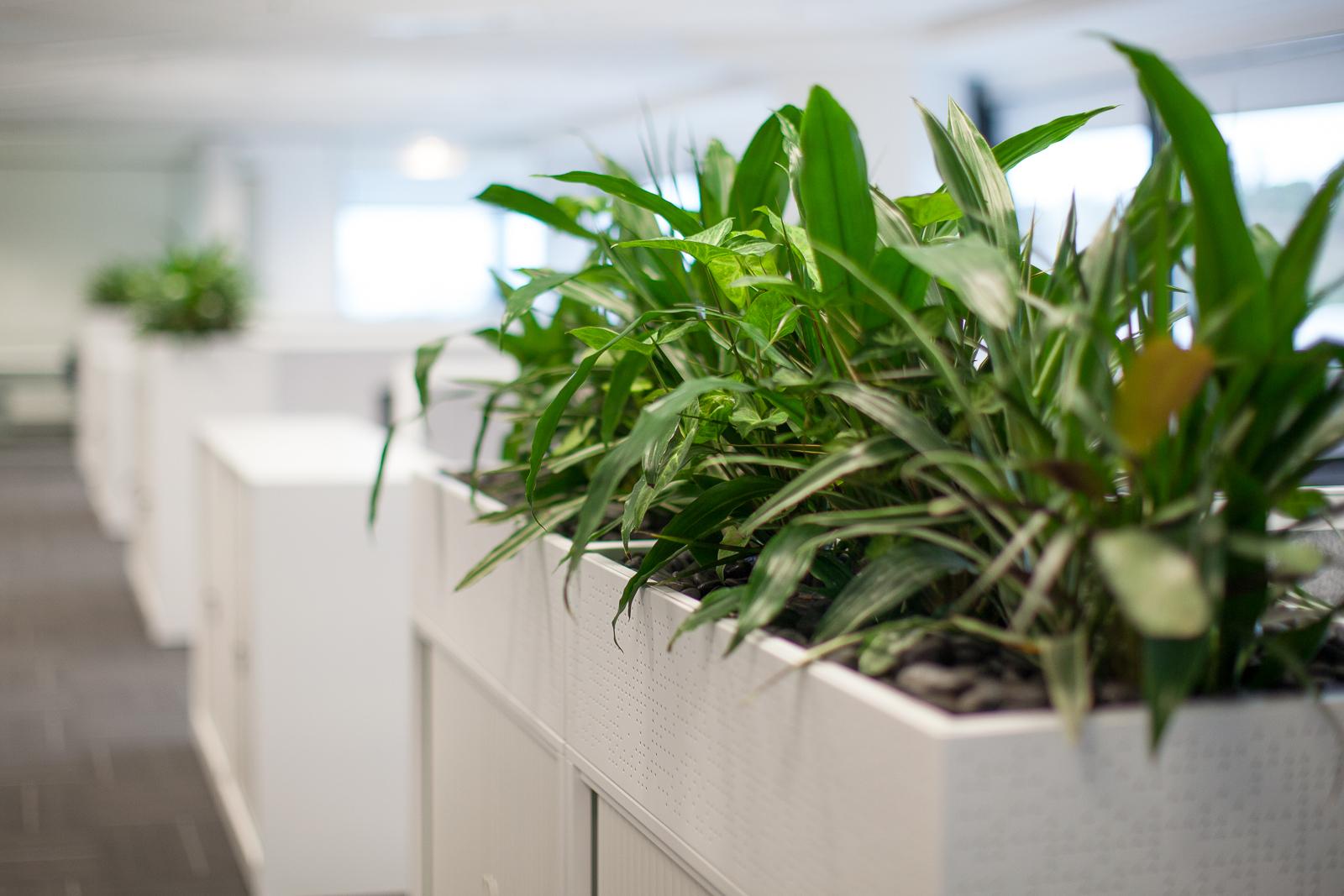 office pot plant