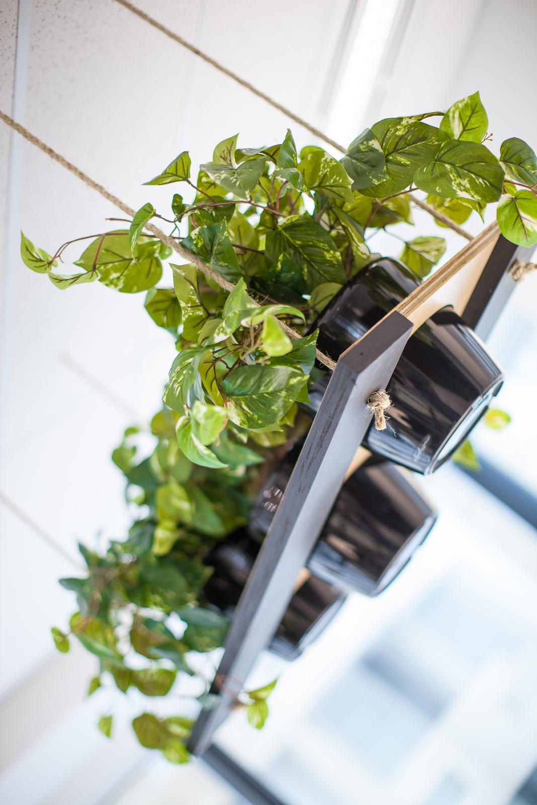hanging pot plants